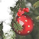 Red Christmas ball on snowy fir by pogomcl