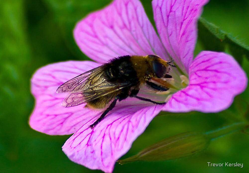 Bee by Trevor Kersley