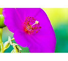 Purple Tropical Flower Photographic Print
