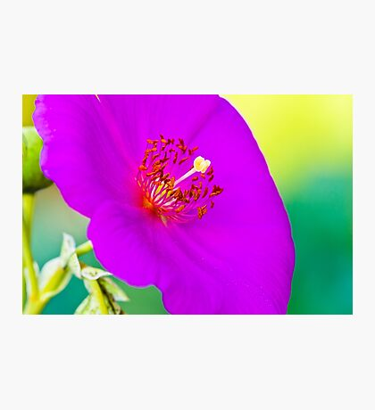 Purple Tropical Flower Photographic Print