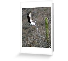 Osprey Taking Flight Greeting Card