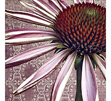 coneflower chic Photographic Print