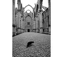 O gato preto Photographic Print