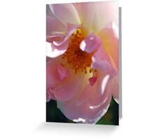 The Face of Love : Rose Treasure Greeting Card