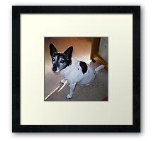 Eddie-my dearest friend & companion Framed Print