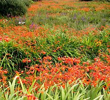 Colourful Hedgerows and Fields, Ring of Kerry.. by eithnemythen