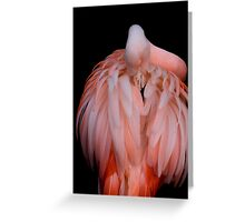 Preening Greeting Card
