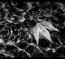 Water Leaf by sedge808