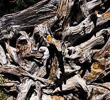 Gnarly Root... by Richard Bozarth