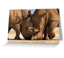 White Rhino at loggerheads. Nakuru National Park, Kenya. Africa. Greeting Card