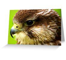 Hobby  (Falco Subbuteo) - Bird of Prey Greeting Card
