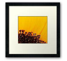 the heart of a sunflower Framed Print