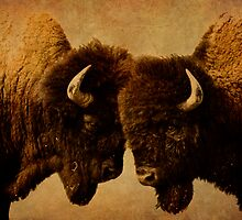 Bison I by Miles Glynn