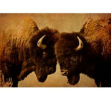 Bison I Photographic Print