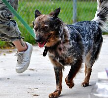 Name this Dog? by SamTheCowdog