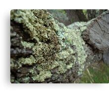 Moss Grows Fat Canvas Print