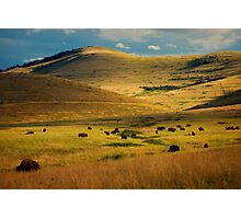 Bison Landscape 1 Photographic Print