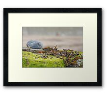 Seaweed Tangle Framed Print
