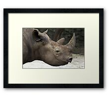 Black Rhinoceros - Eastern & Central Africa Framed Print