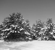 Snowy Trees by Linda Miller Gesualdo