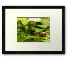 One jump away from safety. Framed Print