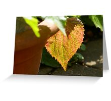 First signs of autumn Greeting Card