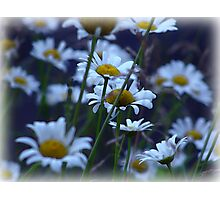 The Daisy Patch Photographic Print