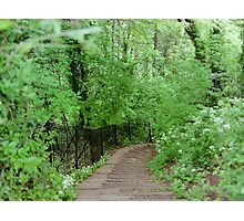 The Path in Bath - England Photographic Print