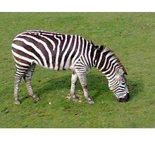 stripey Photographic Print