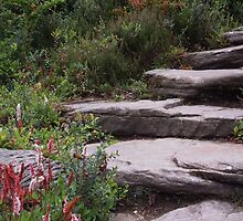 Rock Garden Steps by rualexa