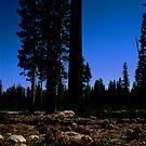 Near Laurel Lake in Yosemite N.P. (7/3/2010) by Rodney Johnson