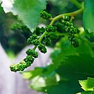 Gonna Be Grapes!! by Heather Friedman