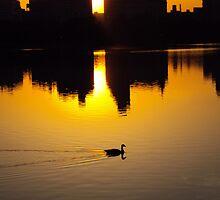 duck 1 by Daniel88
