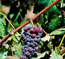 I Heard it Through the Grape Vine by Nancy Stafford