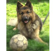 german shepherd dog.. Photographic Print