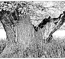 Escot Tree by Mike  Waldron
