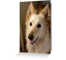 german shepherd dog. Greeting Card