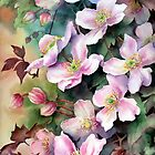 Clematis Montana by Ann Mortimer