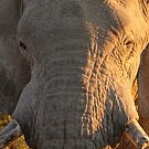 Close Encounter with a Giant by Jennifer Sumpton