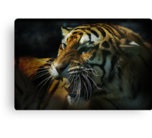 Snarling Tiger  Canvas Print