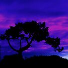 Tree silhouette. by Livvy Young