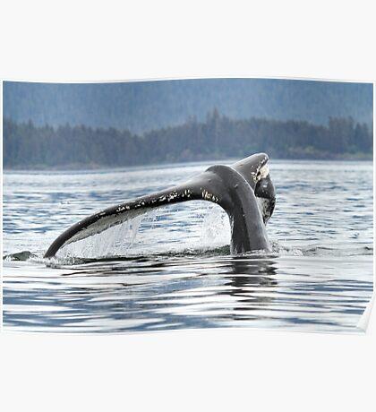 Whale #1638--Broken But It Still Works Poster