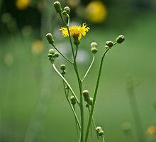 dancing wildflowers by Mark de Jong
