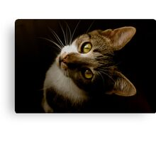 Did You Say Dinner?! Canvas Print