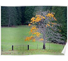 alder tree last leaves Poster