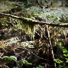 Alaska Rain Forest by TraceyR62