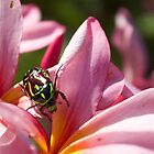 Frangipani with Beetle  by Margaret Stanton