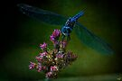 Dark Dragonfly by Chris Lord