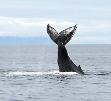 Whale #533 by Gina Ruttle  (Whalegeek)