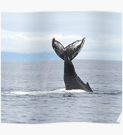 Whale #533 Poster
